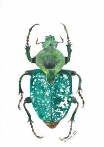 Scarab beetle - Cetoniinae