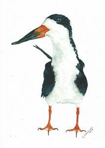 Black skimmer - REV Originals - Paintings & Prints, Animals