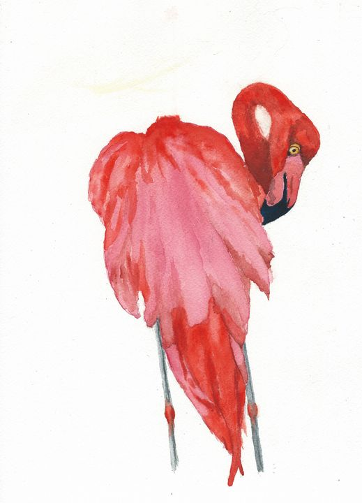 American flamingo - REV Originals