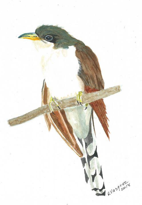 Yellow-billed cuckoo - REV Originals