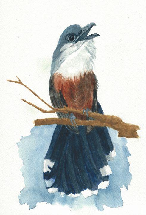 Chesnut-breasted cuckoo - REV Originals