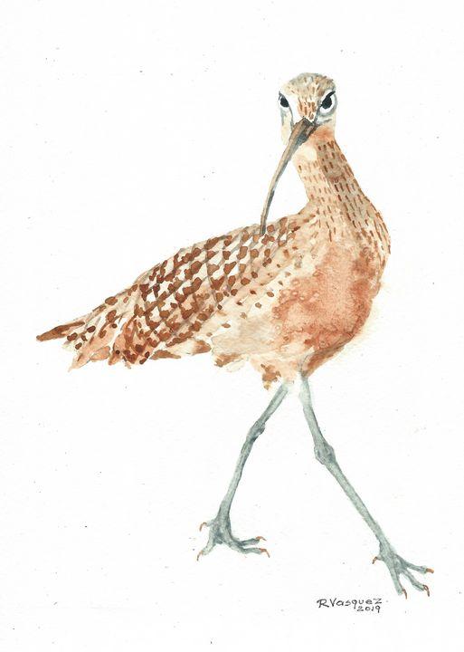 Long-billed curlew - REV Originals