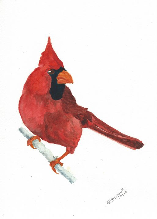 Northern cardinal - REV Originals