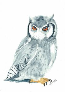Northern white-faced owl 2