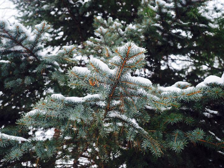 Winter Tree - Liana