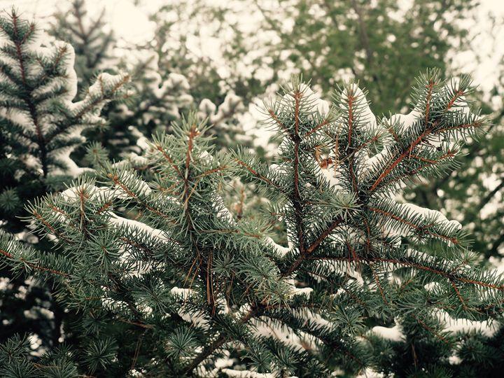 Branch - Liana