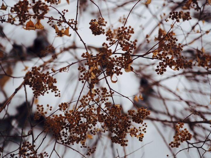 Twigs - Liana
