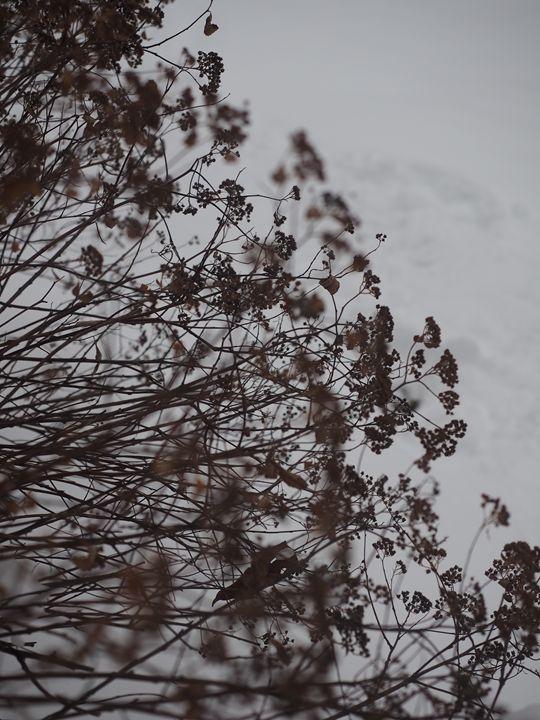 Branches - Liana