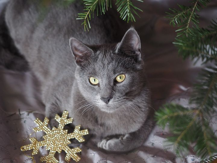Cat with Snowflake - Liana