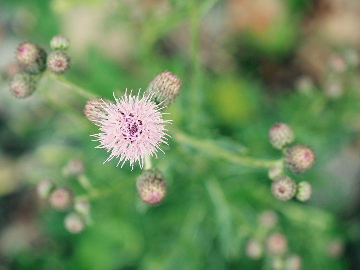 Flower - Liana