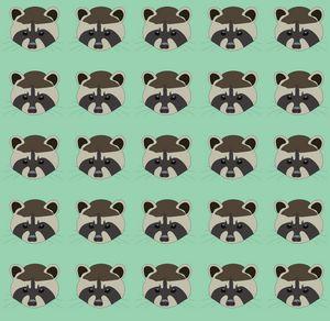 Funny raccoons