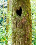 Heart shaped hole in blue ridge moun