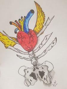 Heart and pelvis