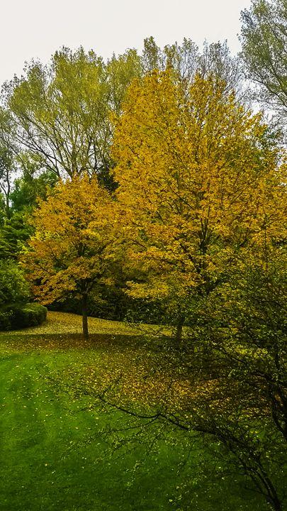Autum Tree Colors - Bogdan Dumitrescu