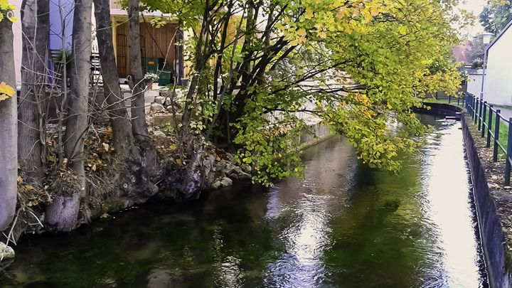 River Under the Trees - Bogdan Dumitrescu