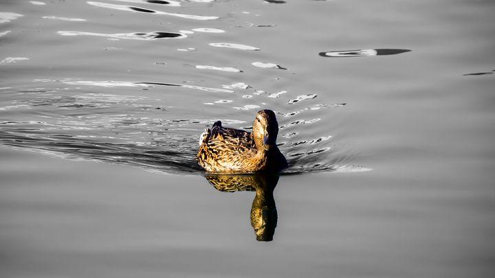 Teenage Duckling - Bogdan Dumitrescu