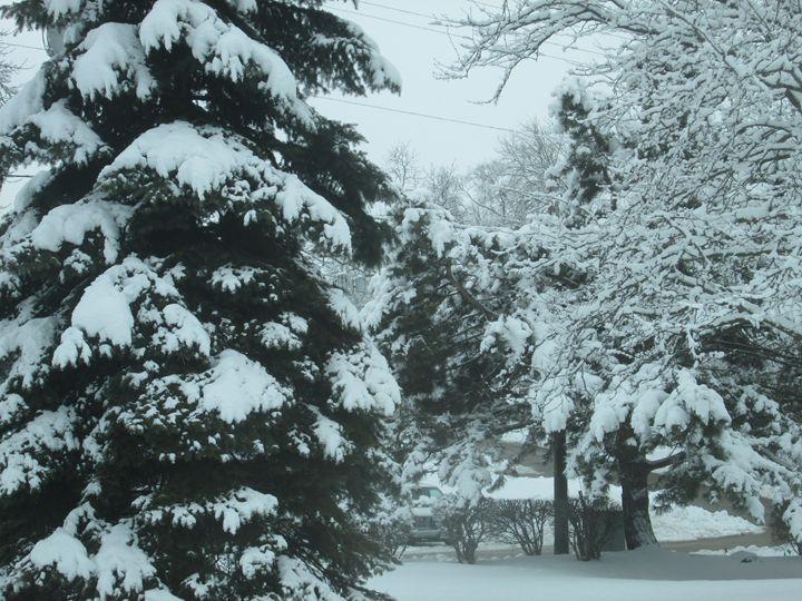 Winter Trees - Kitty