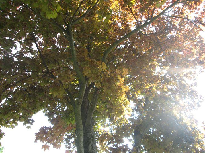 Autumn Trees - Kitty