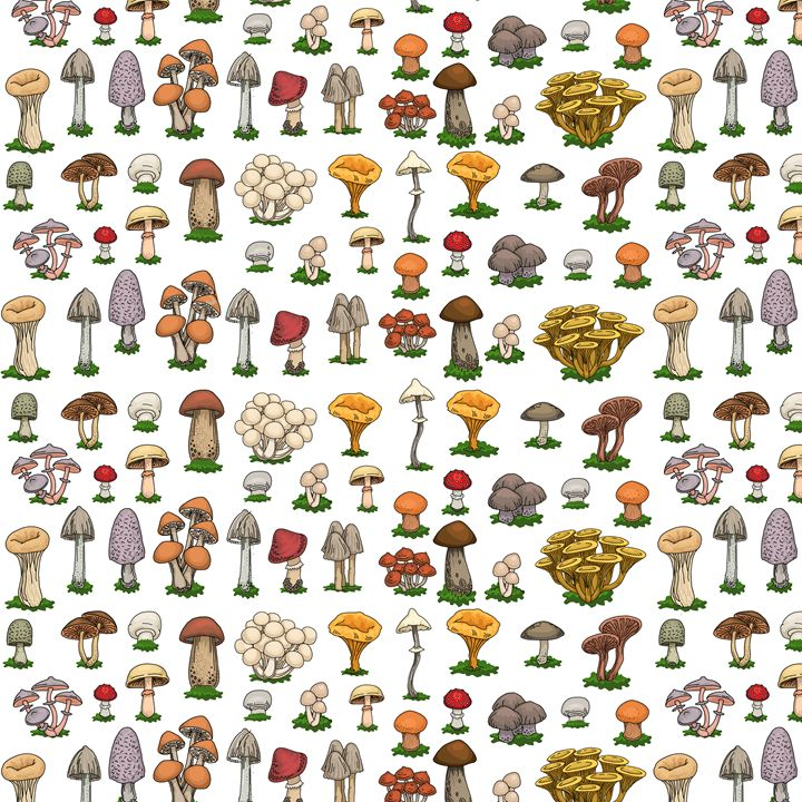 Mushrooms - Marija Piliponyte Illustration