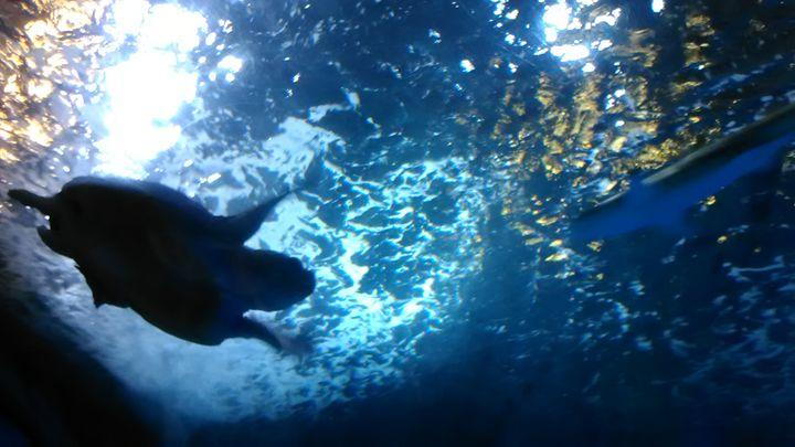 Sea giants - Teagan Gibbs