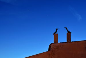 Chimney birds at dusk
