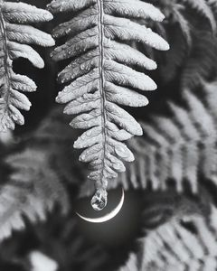 Black and White Moon Drop