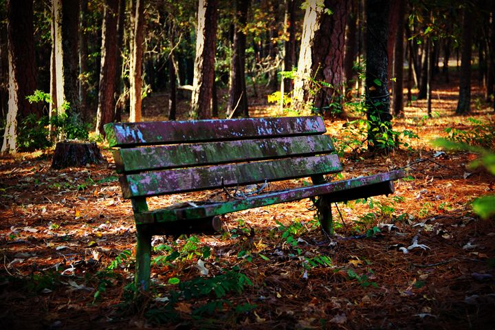 The Thinking Place - Rochelle J Photography