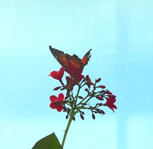 In Living Color
