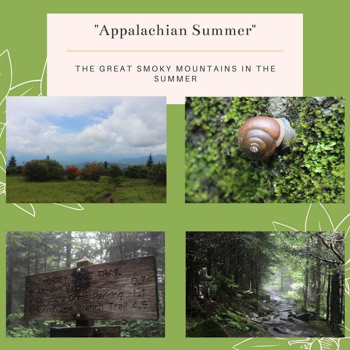 Appalachian Summer Stationary Pack - Worth Writing Home About