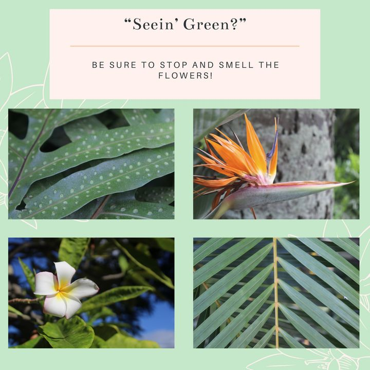 Seein' Green Stationary Pack - Worth Writing Home About