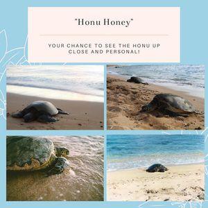 Honu Honey Stationary Pack