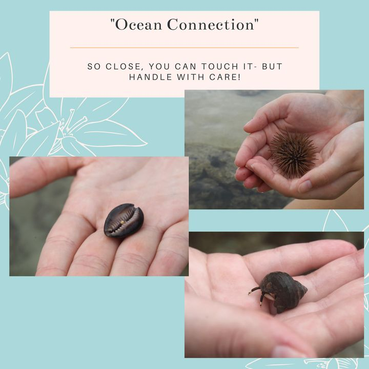 Ocean Connection Stationary Pack - Worth Writing Home About