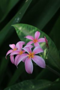 Tropical Blooms - Worth Writing Home About