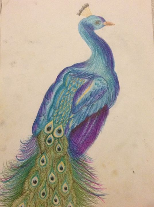 Peacock - Animal Arts
