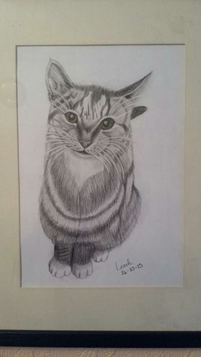 House cat - Animal Arts
