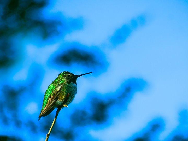 Hummingbird - Vyctorieah