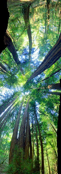 Redwood trip - Vyctorieah
