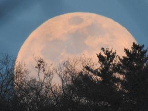 Pink Super Moon