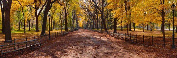Central Park by Peter Lik - Finn Gallery