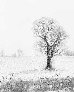 Paint A Tree - Maureen's Moments