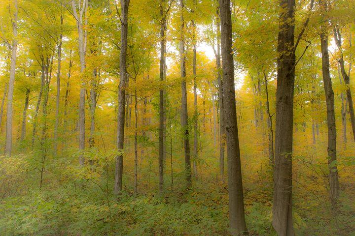 Golden Splendour - Maureen's Moments