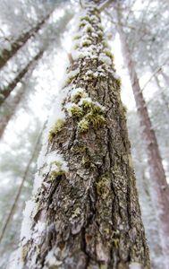 Up A Tree - Maureen's Moments