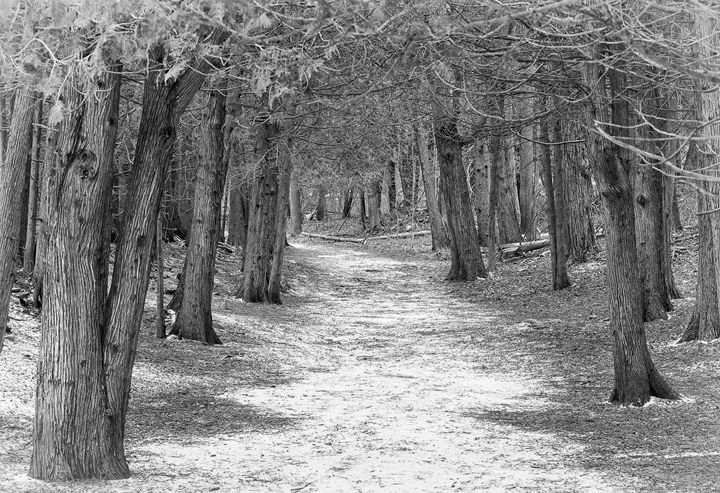 Woodland Path - Maureen's Moments