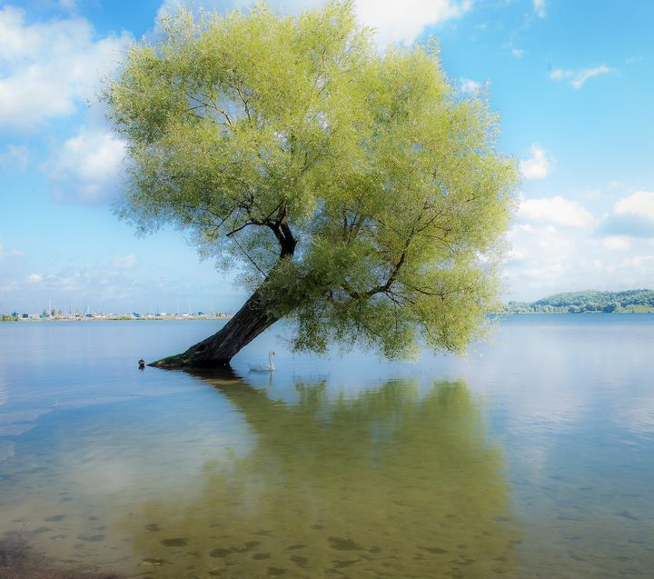 Water For A Tree - Maureen's Moments