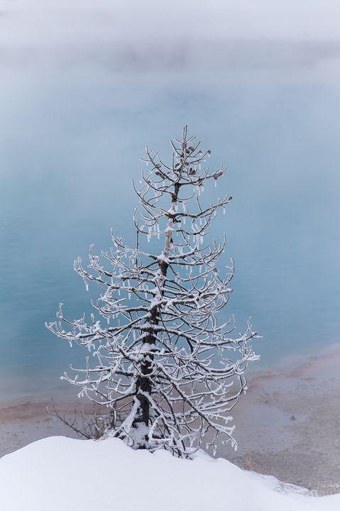 Just A Tree - Maureen's Moments