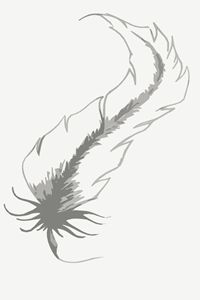 Feather Tattoo 2