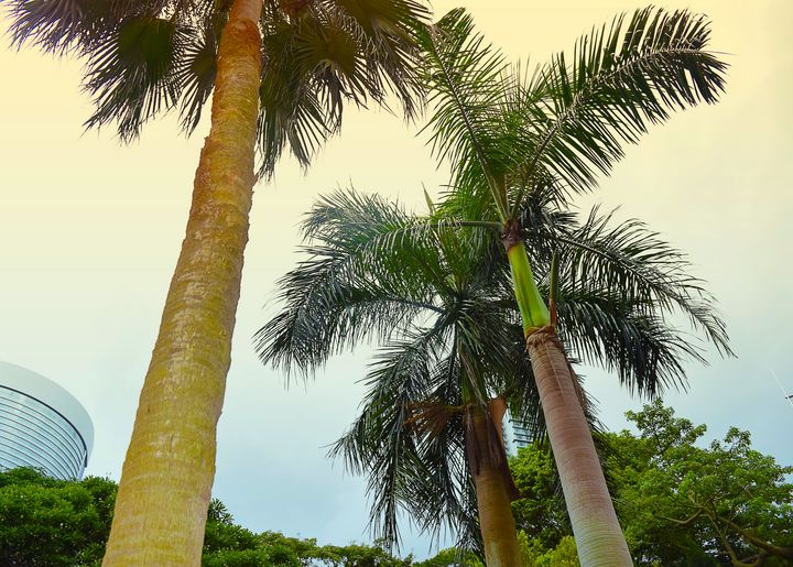 Palm Trees - Creative Gallery