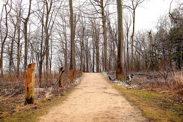 Straight Trail - Creative Gallery