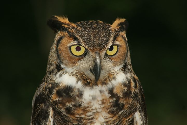 Who Said That? Nighttime Owl - Visions of the World