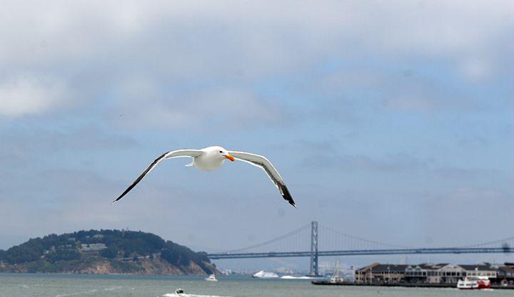 San Francisco Sea Gull - Visions of the World